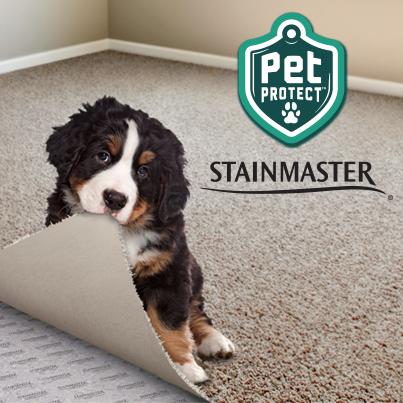 Diablo Flooring Inc New 2015 Stainmaster 174 Petprotect